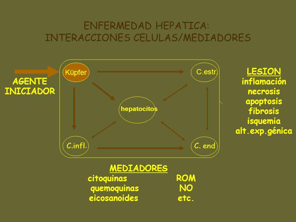 ENFERMEDAD HEPATICA: INTERACCIONES CELULAS/MEDIADORES hepatocitos Küpfer AGENTE INICIADOR MEDIADORES citoquinasROM quemoquinasNO eicosanoidesetc. LESI