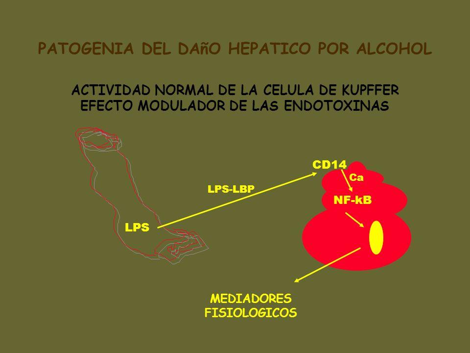 LPS LPS-LBP CD14 NF-kB MEDIADORES FISIOLOGICOS ACTIVIDAD NORMAL DE LA CELULA DE KUPFFER EFECTO MODULADOR DE LAS ENDOTOXINAS Ca PATOGENIA DEL DAñO HEPA