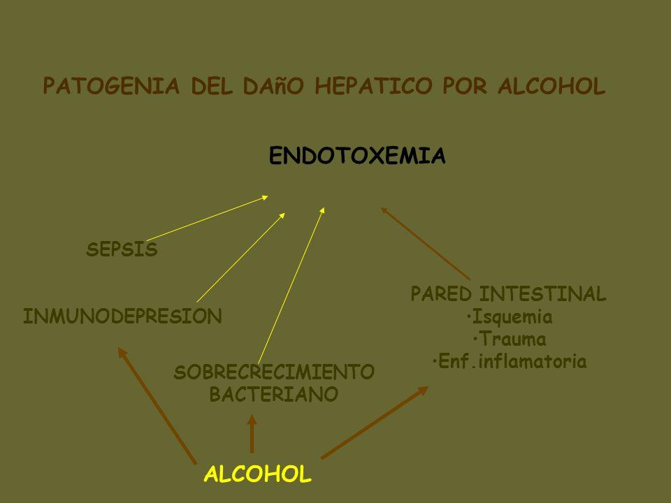 ENDOTOXEMIA SEPSIS INMUNODEPRESION PARED INTESTINAL Isquemia Trauma Enf.inflamatoria SOBRECRECIMIENTO BACTERIANO PATOGENIA DEL DAñO HEPATICO POR ALCOH
