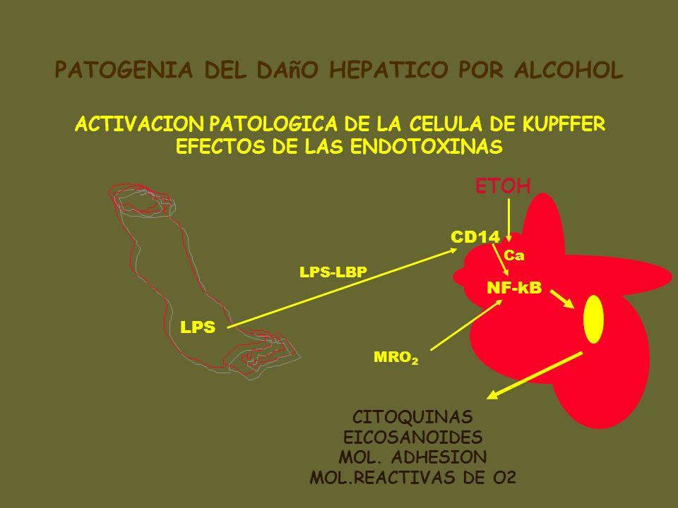 LPS LPS-LBP MRO 2 CITOQUINAS EICOSANOIDES MOL. ADHESION MOL.REACTIVAS DE O2 ACTIVACION PATOLOGICA DE LA CELULA DE KUPFFER EFECTOS DE LAS ENDOTOXINAS E