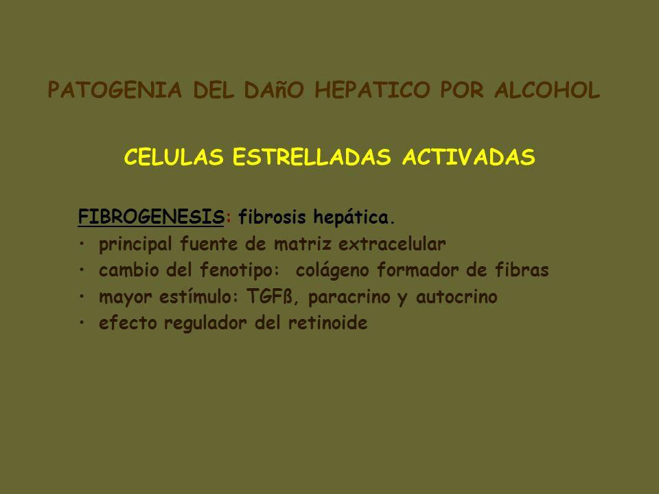 CELULAS ESTRELLADAS ACTIVADAS FIBROGENESIS: fibrosis hepática. principal fuente de matriz extracelular cambio del fenotipo: colágeno formador de fibra