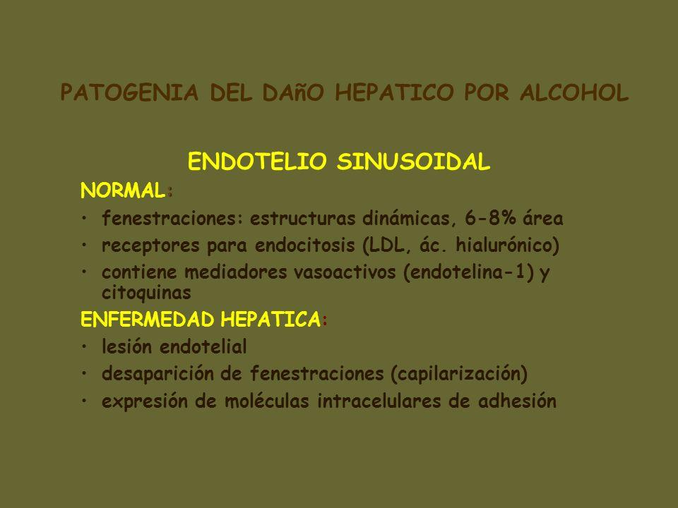 ENDOTELIO SINUSOIDAL : NORMAL: fenestraciones: estructuras dinámicas, 6-8% área receptores para endocitosis (LDL, ác. hialurónico) contiene mediadores