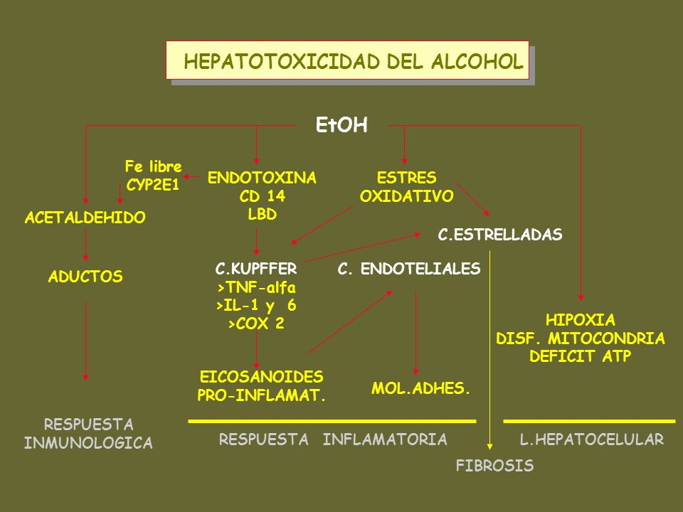 EtOH ACETALDEHIDO RESPUESTA INMUNOLOGICA HIPOXIA DISF. MITOCONDRIA DEFICIT ATP ESTRES OXIDATIVO C.KUPFFER >TNF-alfa >IL-1 y 6 >COX 2 ENDOTOXINA CD 14
