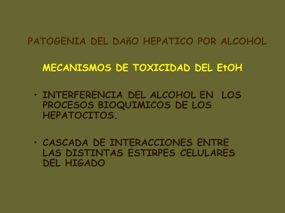 MECANISMOS DE TOXICIDAD DEL EtOH INTERFERENCIA DEL ALCOHOL EN LOS PROCESOS BIOQUIMICOS DE LOS HEPATOCITOS. CASCADA DE INTERACCIONES ENTRE LAS DISTINTA