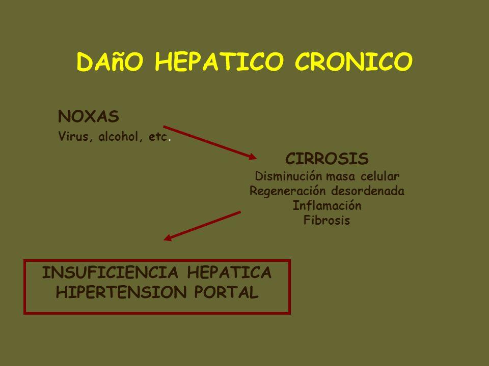 DAñO HEPATICO CRONICO NOXAS Virus, alcohol, etc. CIRROSIS Disminución masa celular Regeneración desordenada Inflamación Fibrosis INSUFICIENCIA HEPATIC