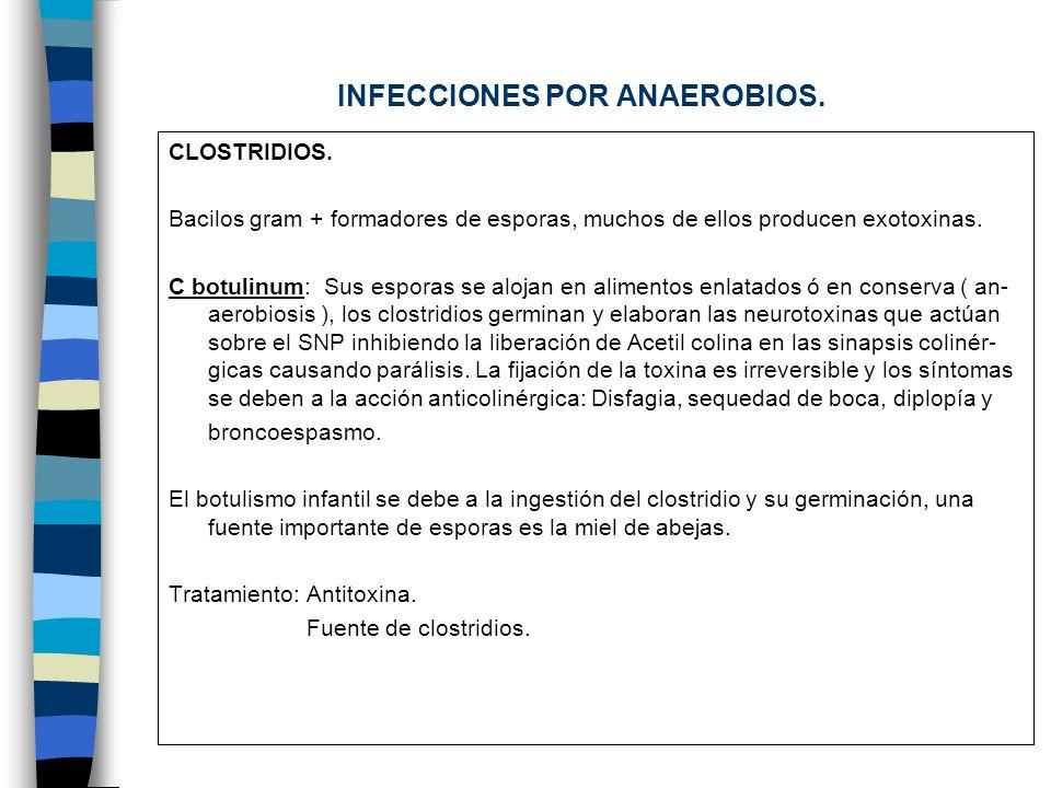INFECCIONES POR ANAEROBIOS. CLOSTRIDIOS. Bacilos gram + formadores de esporas, muchos de ellos producen exotoxinas. C botulinum: Sus esporas se alojan