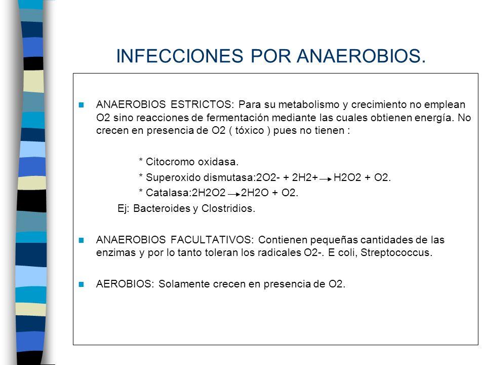 INFECCIONES POR ANAEROBIOS. ANAEROBIOS ESTRICTOS: Para su metabolismo y crecimiento no emplean O2 sino reacciones de fermentación mediante las cuales