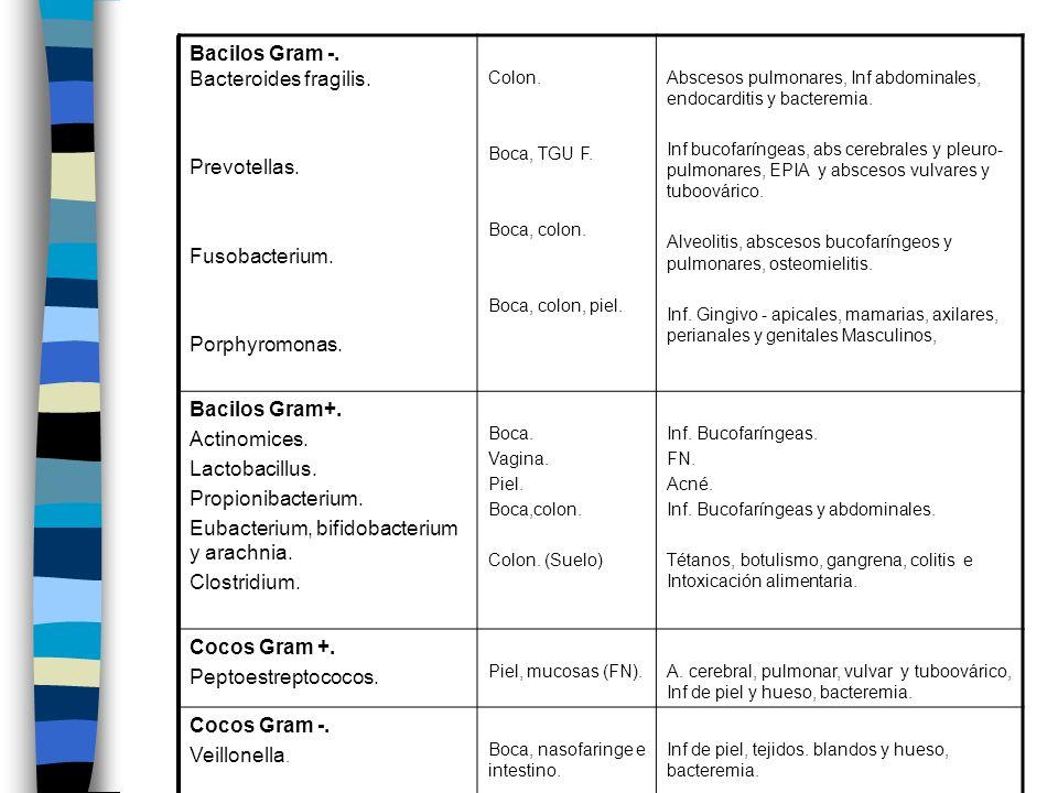 Bacilos Gram -. Bacteroides fragilis. Prevotellas. Fusobacterium. Porphyromonas. Colon. Boca, TGU F. Boca, colon. Boca, colon, piel. Abscesos pulmonar