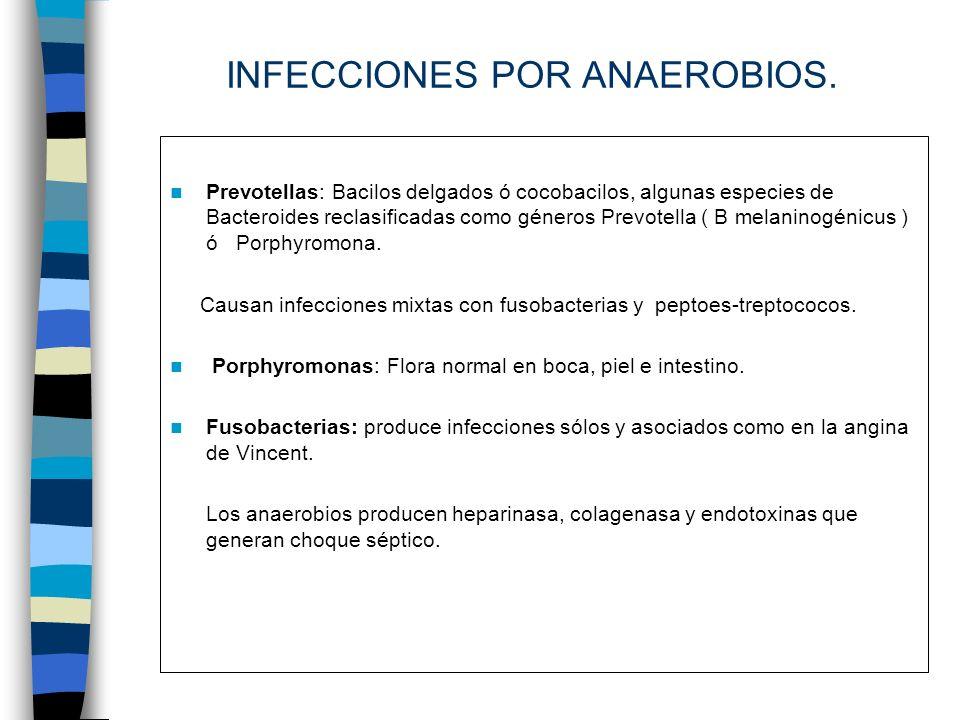 INFECCIONES POR ANAEROBIOS. Prevotellas: Bacilos delgados ó cocobacilos, algunas especies de Bacteroides reclasificadas como géneros Prevotella ( B me
