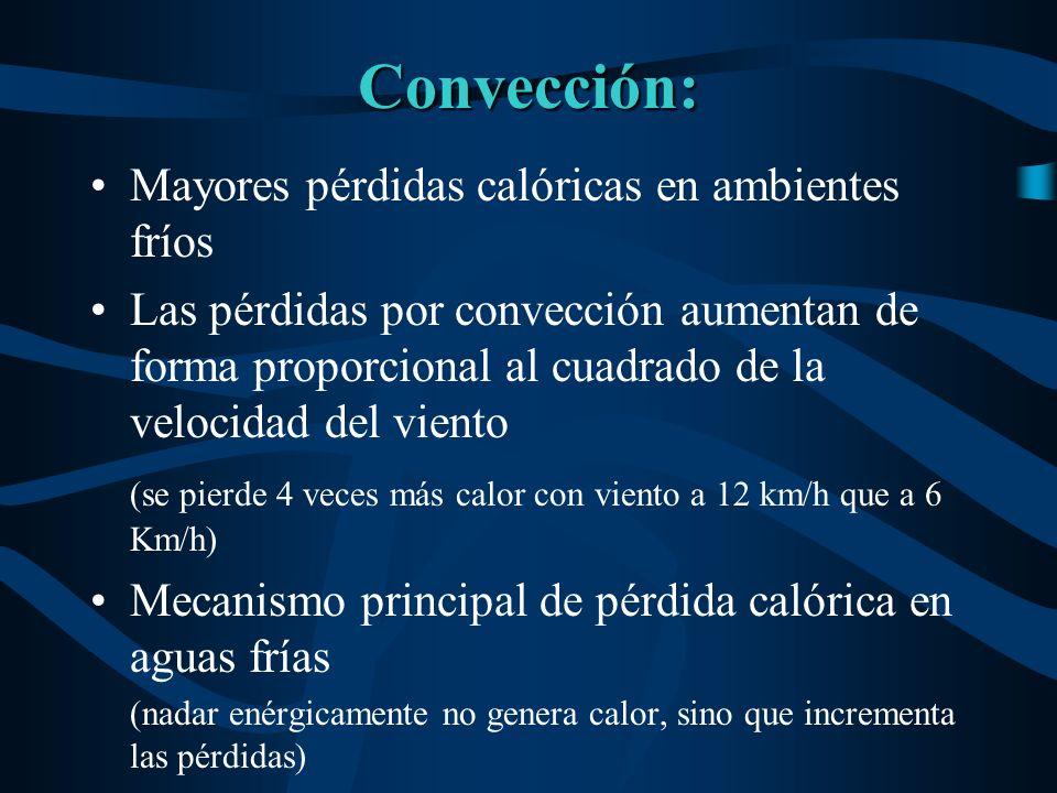 Convección: Mayores pérdidas calóricas en ambientes fríos Las pérdidas por convección aumentan de forma proporcional al cuadrado de la velocidad del v