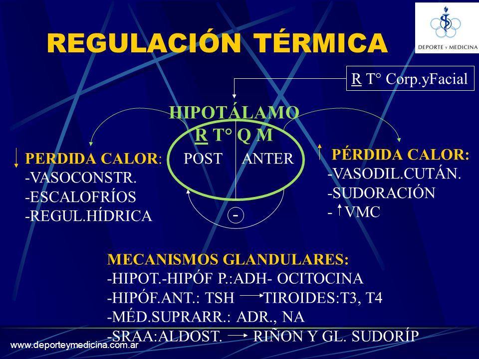 www.deporteymedicina.com.ar REGULACIÓN TÉRMICA HIPOTÁLAMO R T° Q M POST ANTER PÉRDIDA CALOR: -VASODIL.CUTÁN.