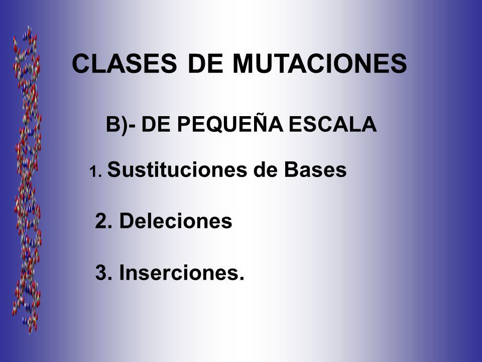 CLASES DE MUTACIONES B)- DE PEQUEÑA ESCALA 1. Sustituciones de Bases 2. Deleciones 3. Inserciones.
