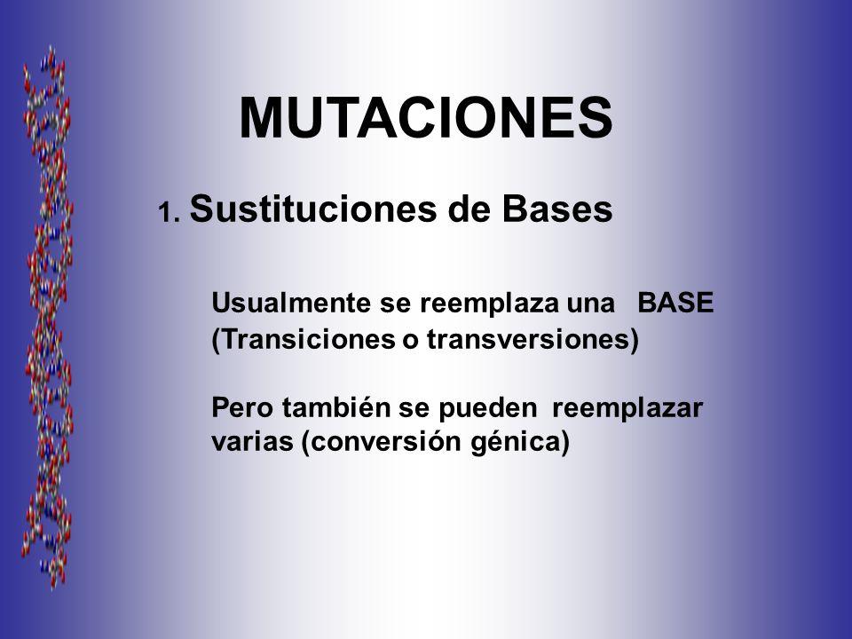 MUTACIONES 1.