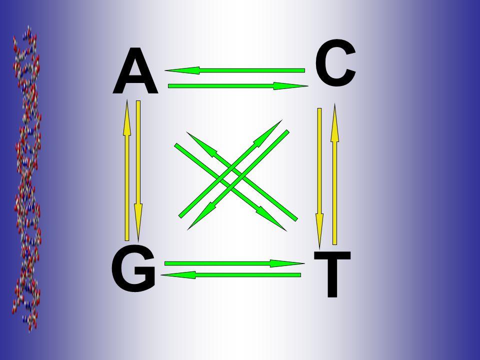 A G C T