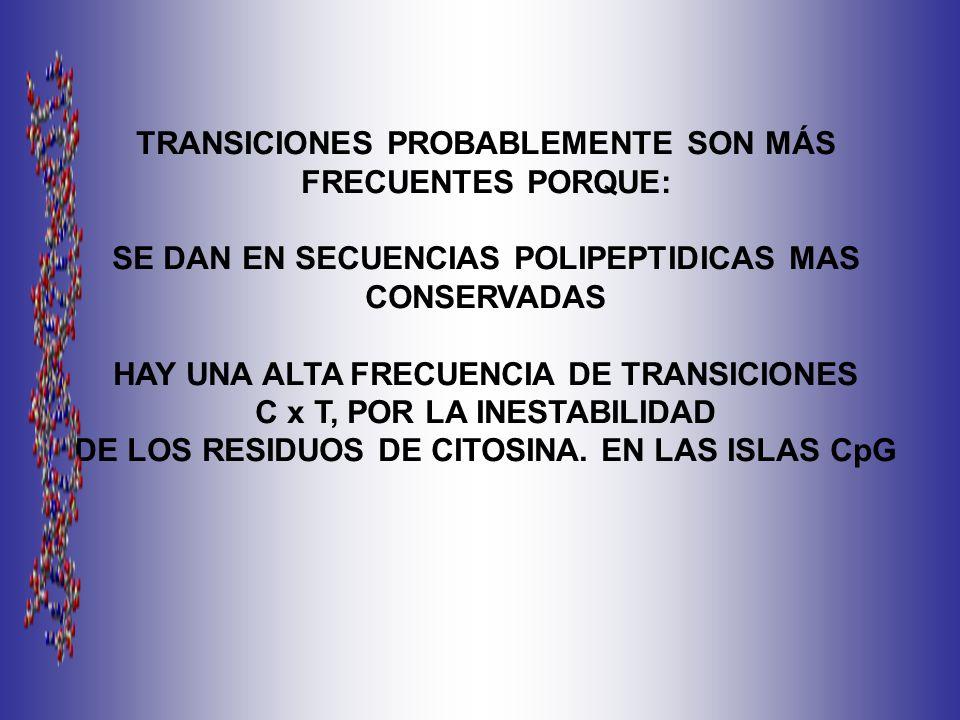 TRANSICIONES PROBABLEMENTE SON MÁS FRECUENTES PORQUE: SE DAN EN SECUENCIAS POLIPEPTIDICAS MAS CONSERVADAS HAY UNA ALTA FRECUENCIA DE TRANSICIONES C x T, POR LA INESTABILIDAD DE LOS RESIDUOS DE CITOSINA.