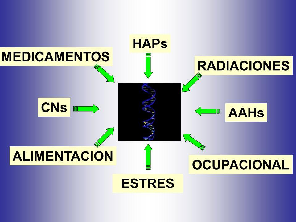HAPs AAHs CNs ESTRES RADIACIONES MEDICAMENTOS OCUPACIONAL ALIMENTACION