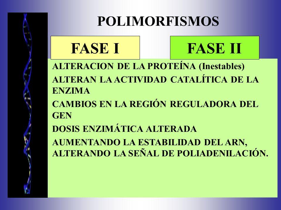 POLIMORFISMOS ALTERACION DE LA PROTEÍNA (Inestables) ALTERAN LA ACTIVIDAD CATALÍTICA DE LA ENZIMA CAMBIOS EN LA REGIÓN REGULADORA DEL GEN DOSIS ENZIMÁTICA ALTERADA AUMENTANDO LA ESTABILIDAD DEL ARN, ALTERANDO LA SEÑAL DE POLIADENILACIÓN.