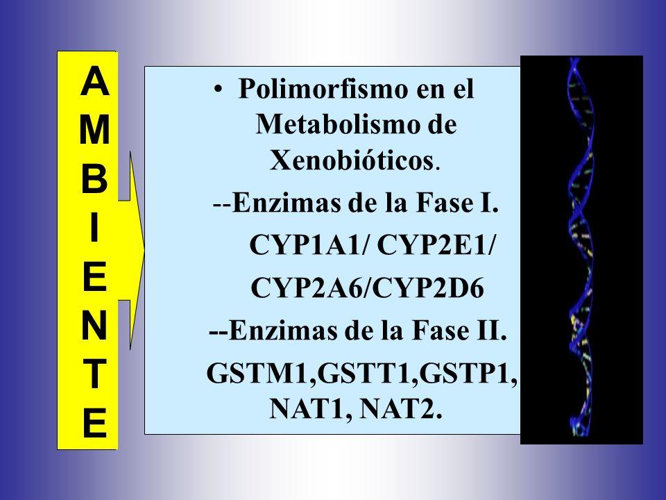 Polimorfismo en el Metabolismo de Xenobióticos.--Enzimas de la Fase I.