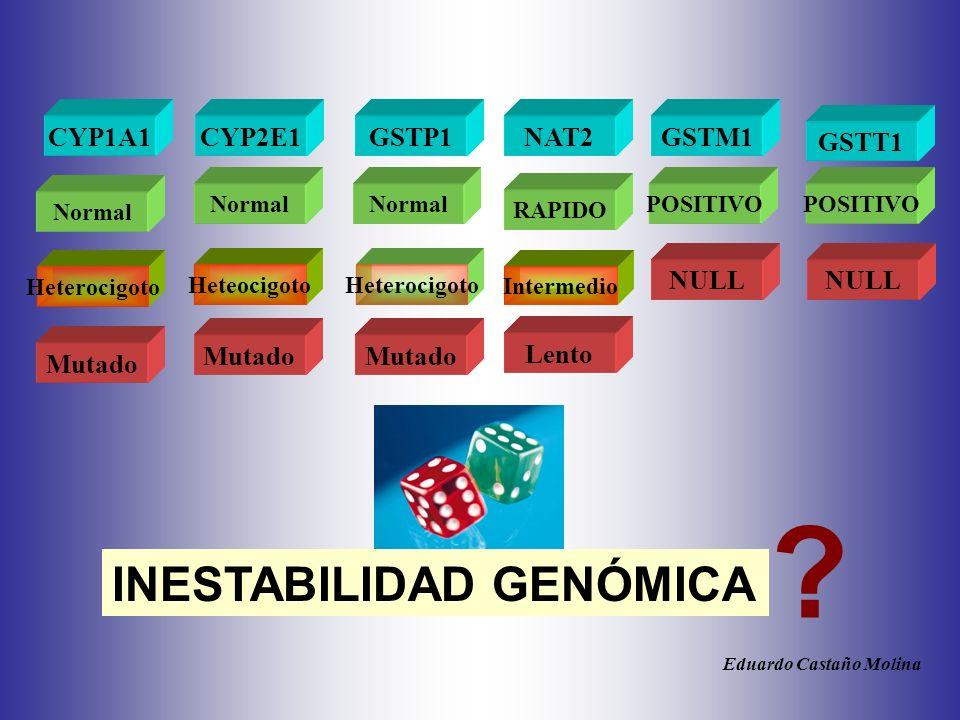 CYP2E1 Lento Normal RAPIDO Heteocigoto Mutado CYP1A1 Normal Heterocigoto Mutado GSTP1 Normal Heterocigoto Mutado GSTM1 POSITIVO NULL .