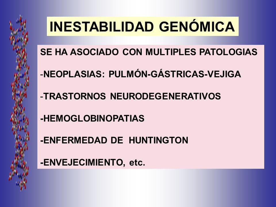 SE HA ASOCIADO CON MULTIPLES PATOLOGIAS -NEOPLASIAS: PULMÓN-GÁSTRICAS-VEJIGA -TRASTORNOS NEURODEGENERATIVOS -HEMOGLOBINOPATIAS -ENFERMEDAD DE HUNTINGTON -ENVEJECIMIENTO, etc.