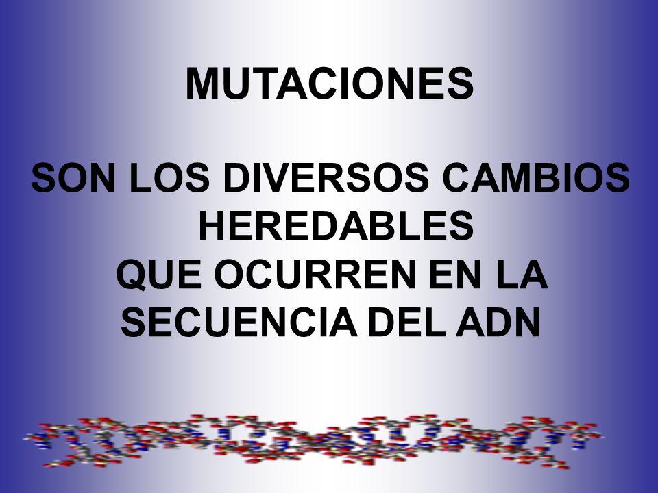 MUTACIONES SON LOS DIVERSOS CAMBIOS HEREDABLES QUE OCURREN EN LA SECUENCIA DEL ADN