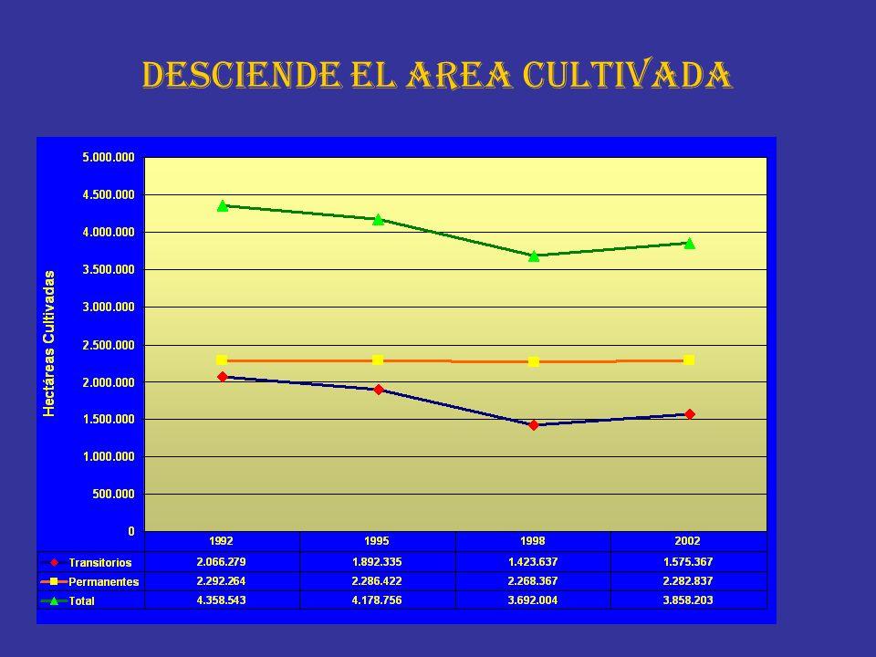 DESCIENDE EL AREA CULTIVADA
