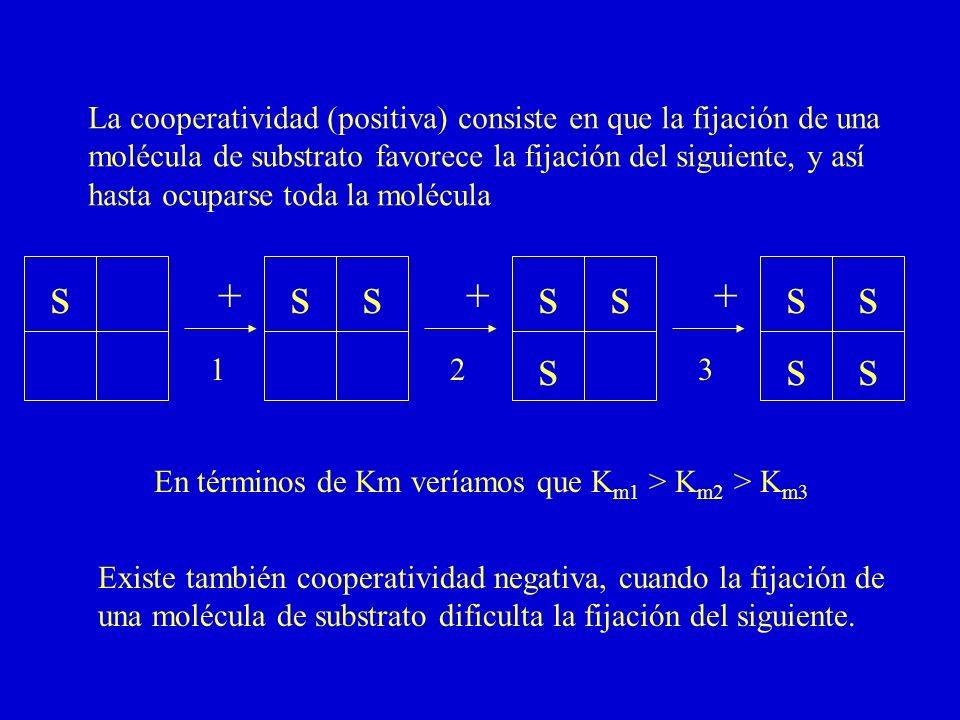La cooperatividad (positiva) consiste en que la fijación de una molécula de substrato favorece la fijación del siguiente, y así hasta ocuparse toda la
