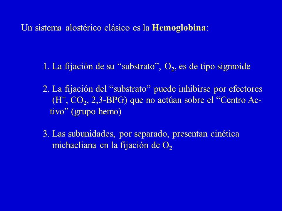 Un sistema alostérico clásico es la Hemoglobina: 1. La fijación de su substrato, O 2, es de tipo sigmoide 2. La fijación del substrato puede inhibirse