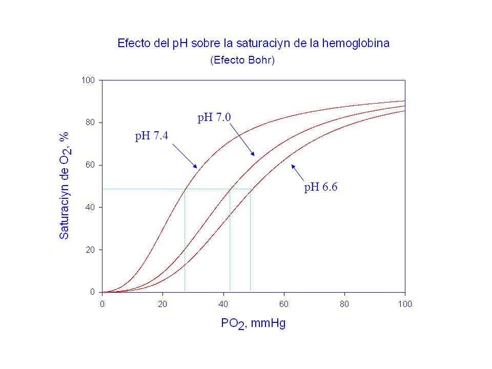 pH 7.4 pH 7.0 pH 6.6 (Efecto Bohr)