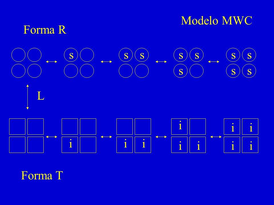 s sssss s ss s L i iii ii i ii i Forma R Forma T Modelo MWC