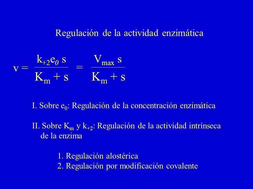 v = k +2 e 0 s K m + s Regulación de la actividad enzimática I. Sobre e 0 : Regulación de la concentración enzimática II. Sobre K m y k +2 : Regulació