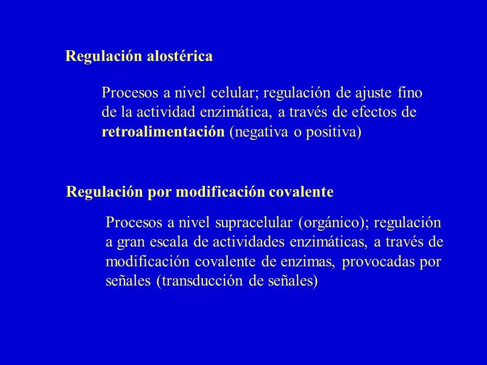 Regulación alostérica Procesos a nivel celular; regulación de ajuste fino de la actividad enzimática, a través de efectos de retroalimentación (negati