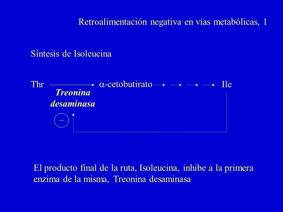 Retroalimentación negativa en vías metabólicas, 1 Thr -cetobutirato Ile Treonina desaminasa Síntesis de Isoleucina El producto final de la ruta, Isole