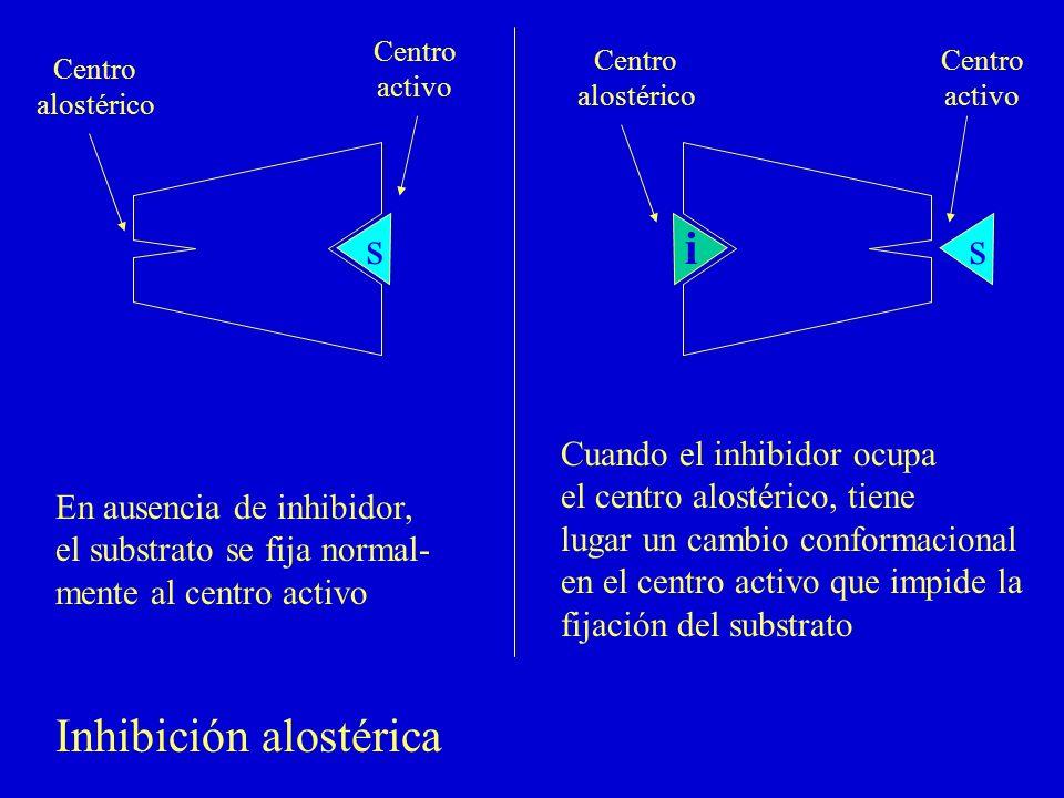 ss i Centro activo Centro alostérico Centro alostérico Centro activo En ausencia de inhibidor, el substrato se fija normal- mente al centro activo Cua