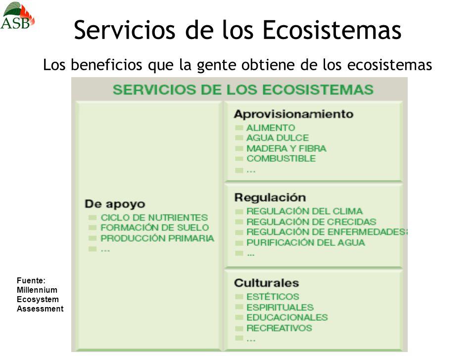Servicios de los Ecosistemas Los beneficios que la gente obtiene de los ecosistemas Fuente: Millennium Ecosystem Assessment