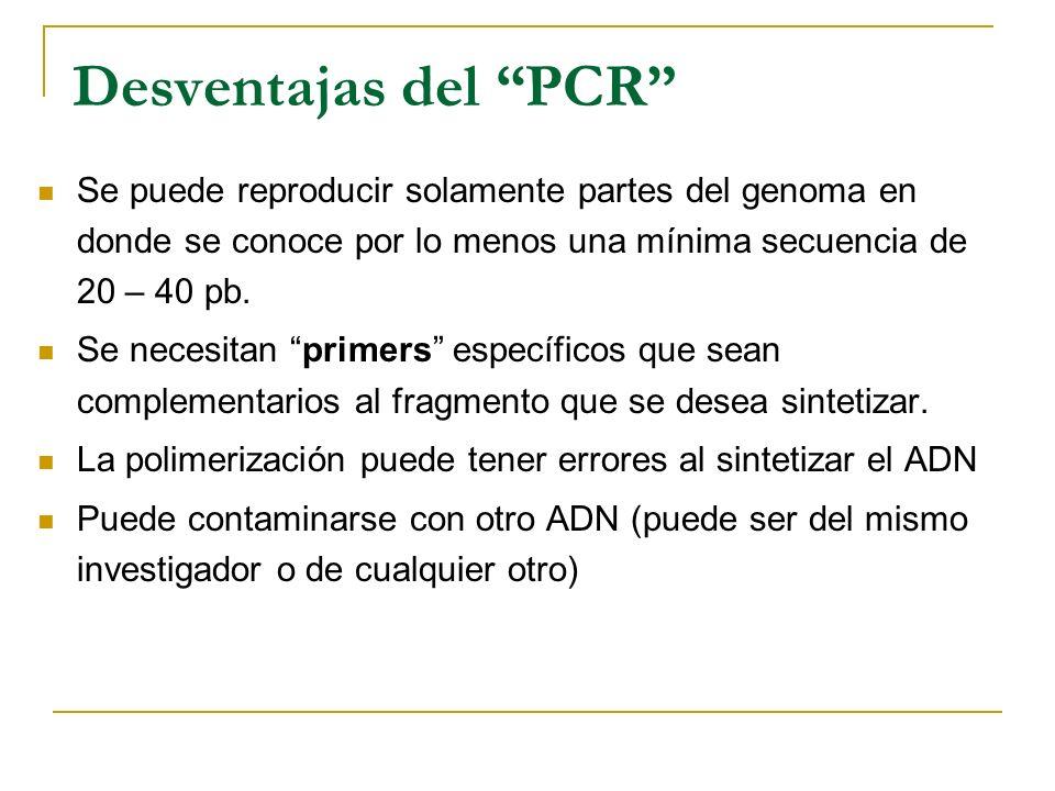 Ventajas del PCR A partir de una muestra pequeña de ADN se puede obtener una cantidad considerable para el estudio que se vaya a realizar. El producto