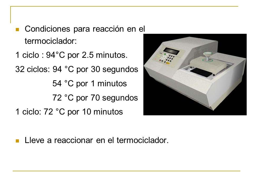 Procedimiento para amplificar el DNA (PCR) Añada los siguientes reactivos en el orden indicado: Cantidad (ul)Componente 10.3Agua estéril (dH 2 O) 3.0M