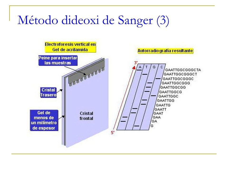 Método dideoxi de Sanger (2)