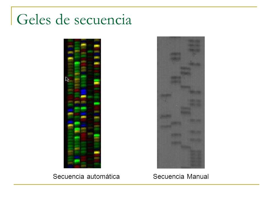 Electroferograma de la secuenciación automática
