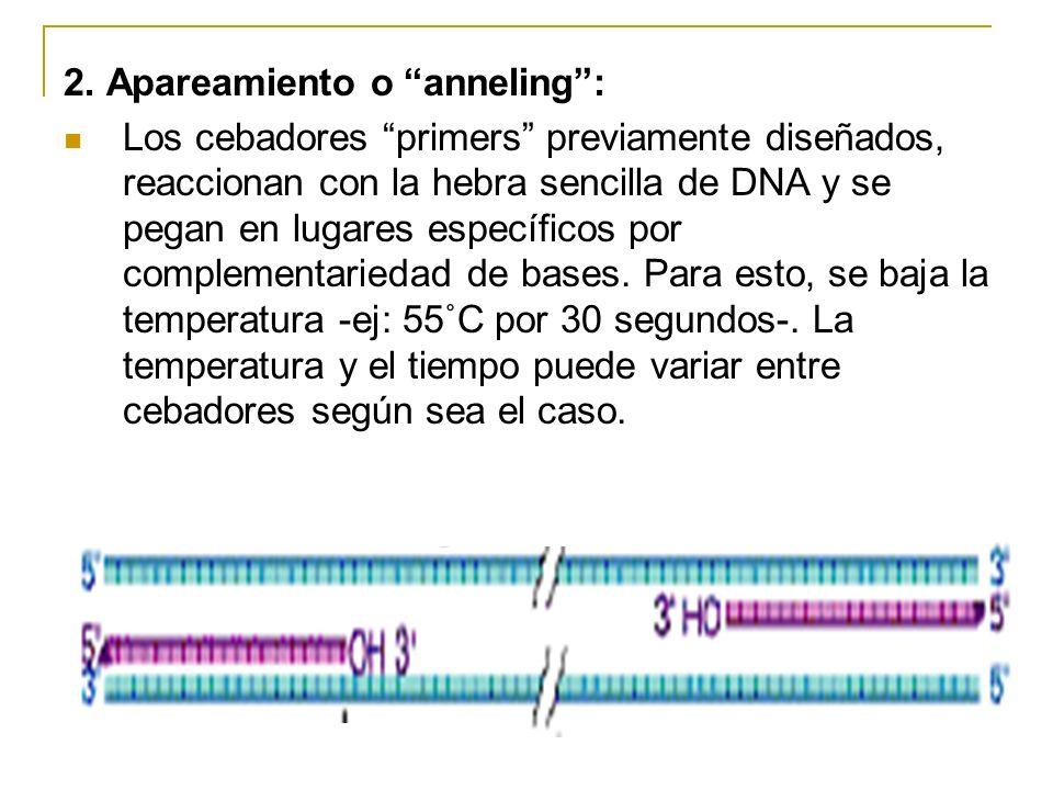 1. Desnaturalización: Consiste en separar la doble hebra de DNA y convertirla en hebra sencilla. -Típicamente se usa una temperatura de 95˚C - 97˚C, p