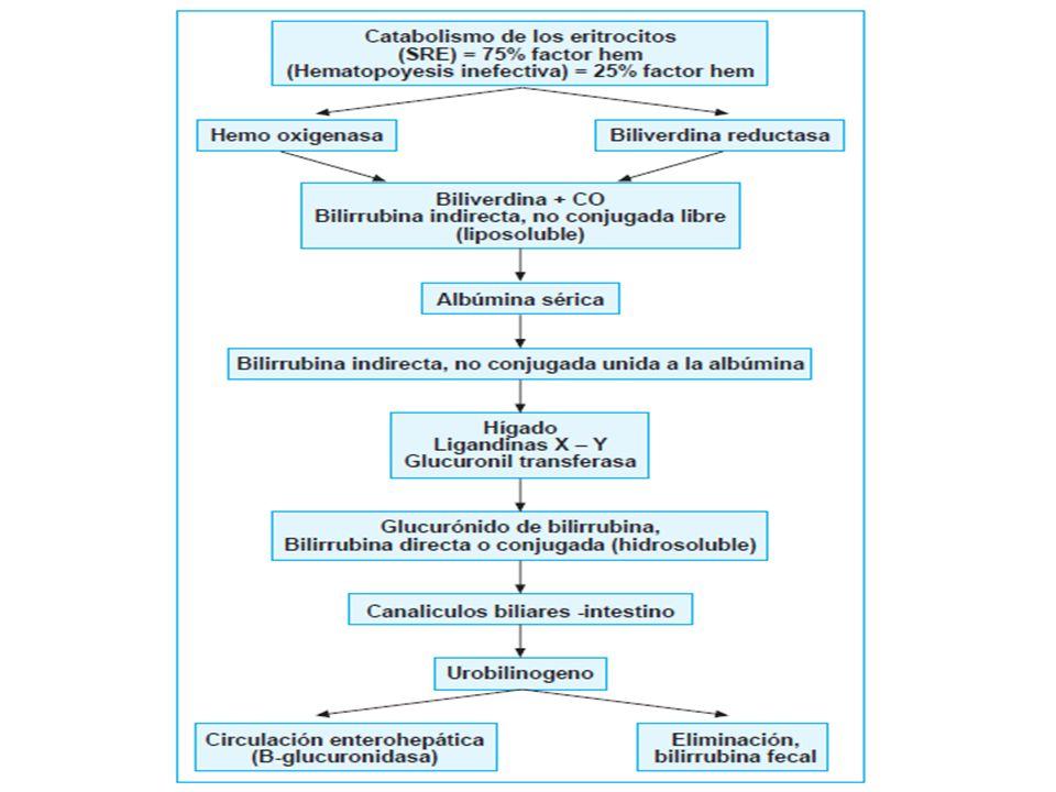 Factores que predisponen a la hiperbilirrubinemia en el neonato