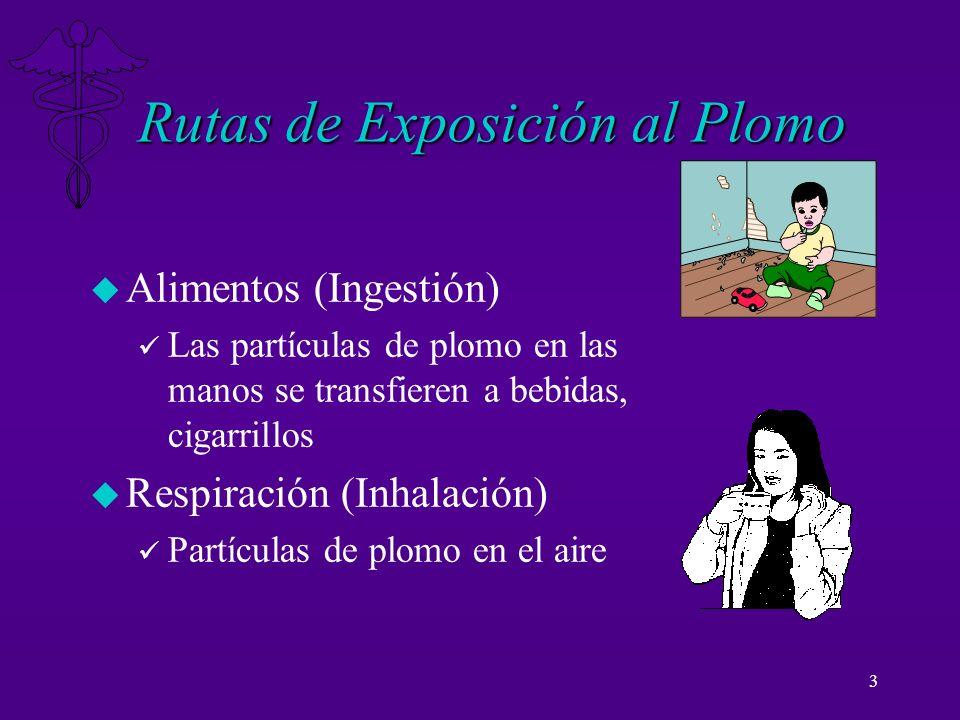 3 Rutas de Exposición al Plomo u Alimentos (Ingestión) ü Las partículas de plomo en las manos se transfieren a bebidas, cigarrillos u Respiración (Inh