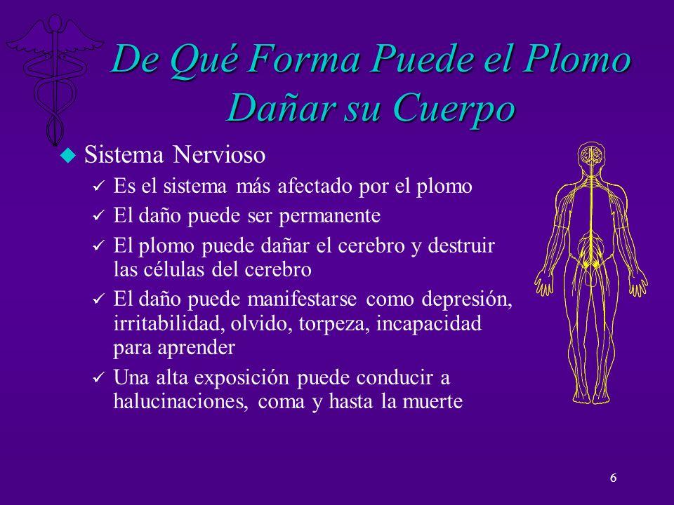 6 De Qué Forma Puede el Plomo Dañar su Cuerpo u Sistema Nervioso ü Es el sistema más afectado por el plomo ü El daño puede ser permanente ü El plomo p