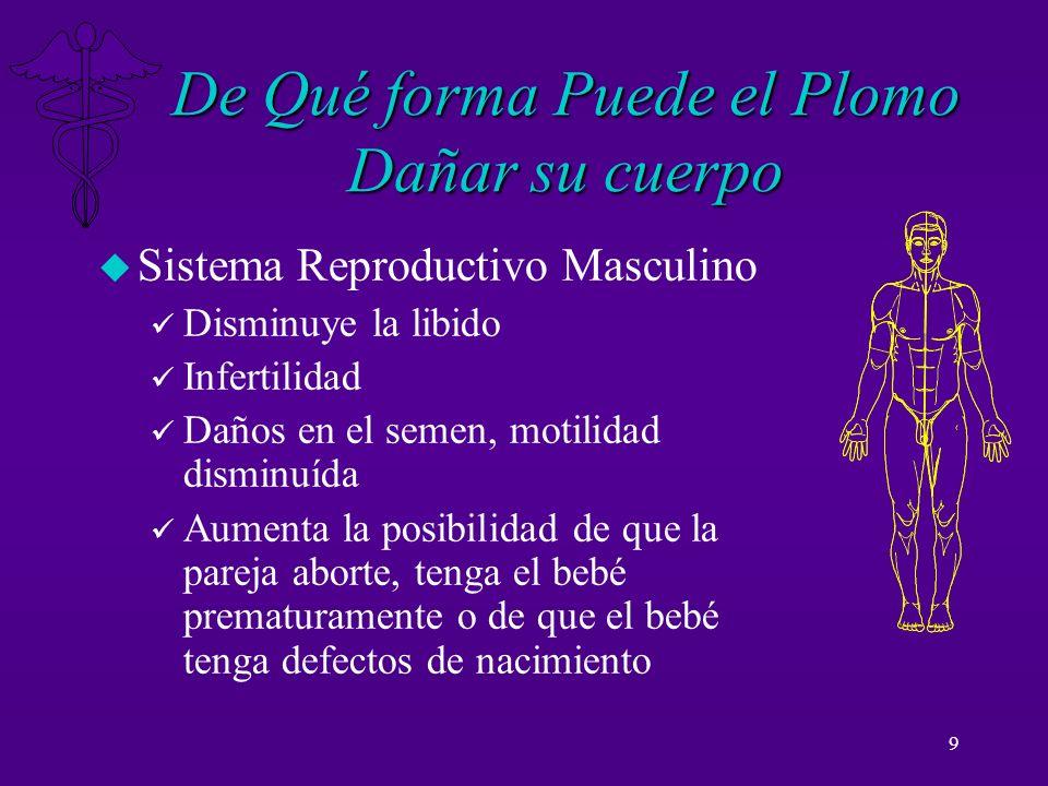 9 De Qué forma Puede el Plomo Dañar su cuerpo u Sistema Reproductivo Masculino ü Disminuye la libido ü Infertilidad ü Daños en el semen, motilidad dis