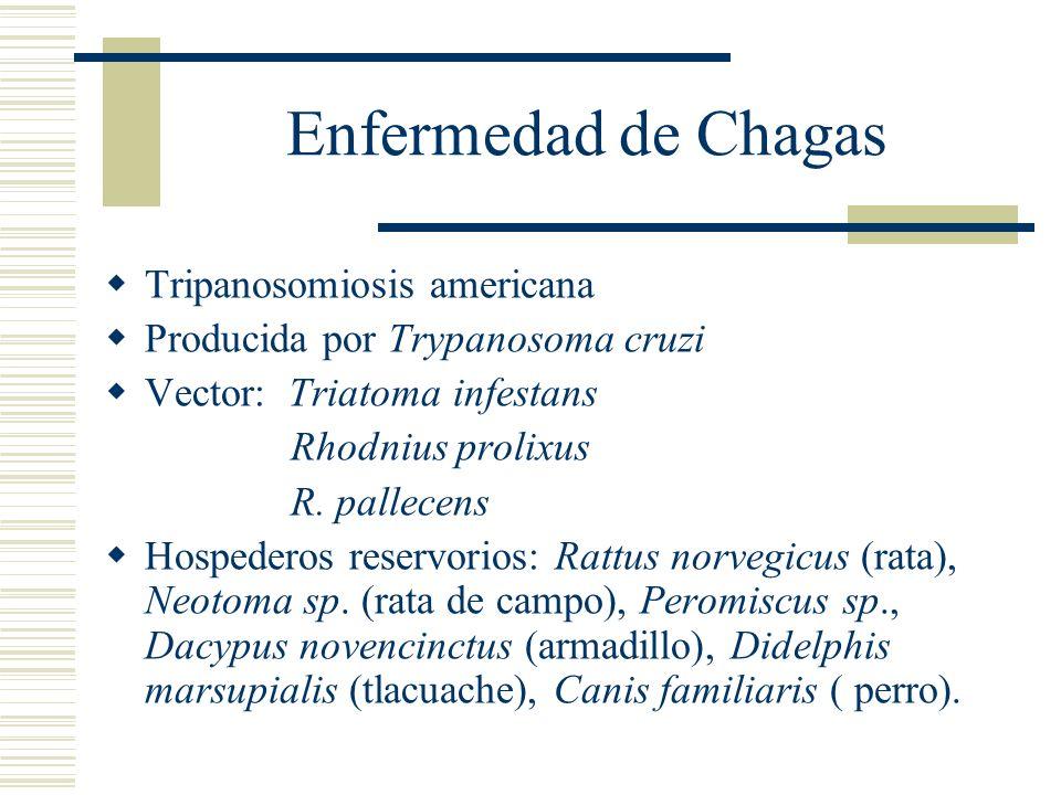 Enfermedad de Chagas Tripanosomiosis americana Producida por Trypanosoma cruzi Vector: Triatoma infestans Rhodnius prolixus R.