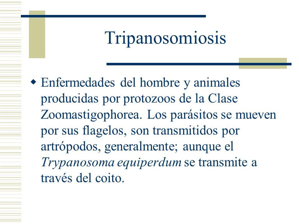 Tripanosomiosis Enfermedades del hombre y animales producidas por protozoos de la Clase Zoomastigophorea.