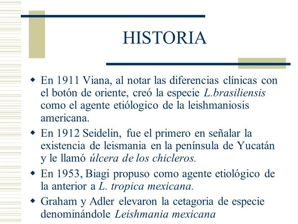 HISTORIA En 1911 Viana, al notar las diferencias clínicas con el botón de oriente, creó la especie L.brasiliensis como el agente etiólogico de la leishmaniosis americana.