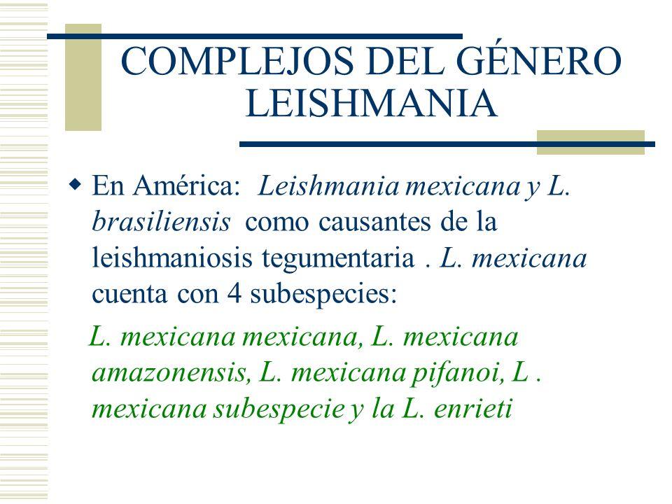 COMPLEJOS DEL GÉNERO LEISHMANIA En América: Leishmania mexicana y L.
