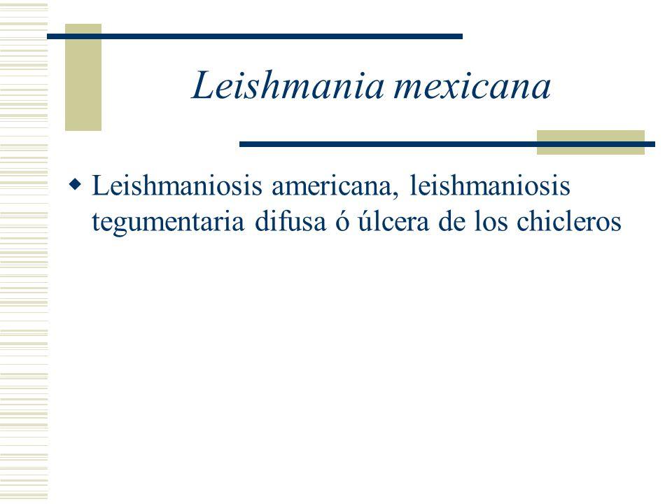 Leishmania mexicana Leishmaniosis americana, leishmaniosis tegumentaria difusa ó úlcera de los chicleros