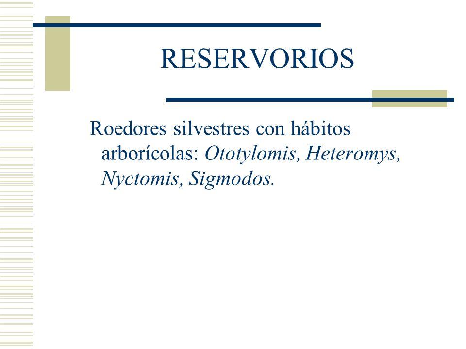 RESERVORIOS Roedores silvestres con hábitos arborícolas: Ototylomis, Heteromys, Nyctomis, Sigmodos.
